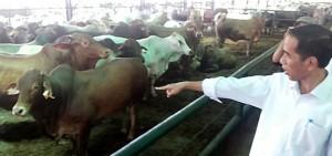 daging-sapi-indonesia-termahal-didunia