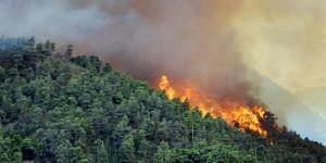Panglima-TNI-dan-Kapolri-akan-mendukung-personil-pemda-untuk-mengeroyok-api